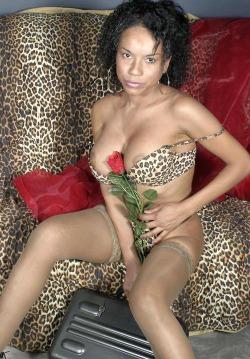 cougar de lyon pour plan q153